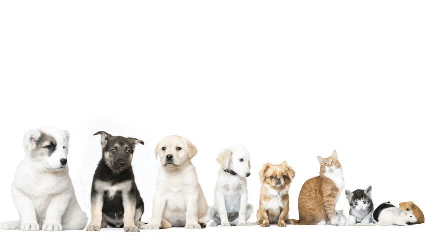Funny pets on a white background | Shutterstock HD Video #16772680