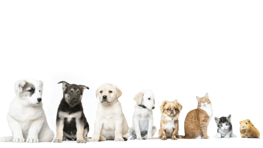 Pets on a white background | Shutterstock HD Video #16772686
