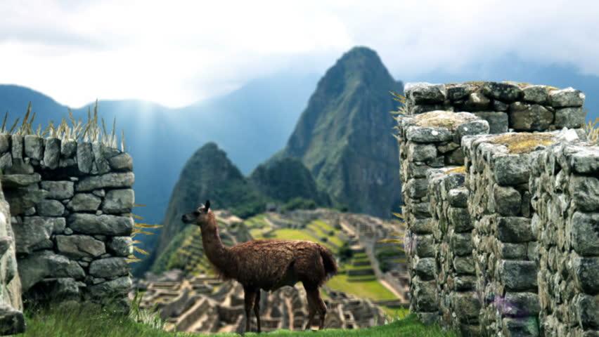 Machu Picchu - View Behind Lama