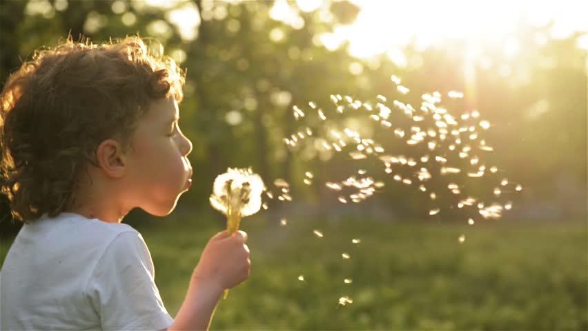 Boy blowing on dandelion beautiful sunset light | Shutterstock HD Video #16861684