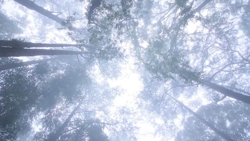 Pan camera circle looing mist under tree   Shutterstock HD Video #16950433