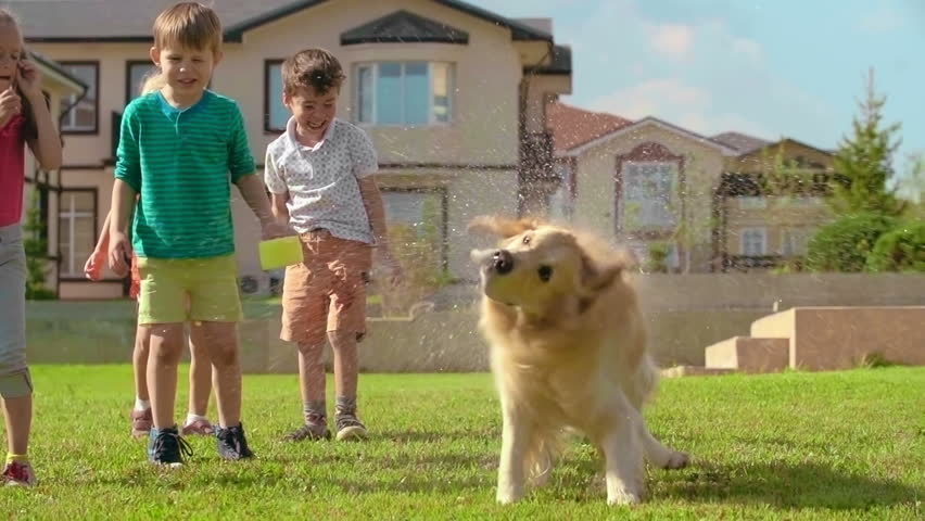 Cute golden retriever shaking off water on green lawn in slow motion; laughing little kids in the background | Shutterstock HD Video #16985116