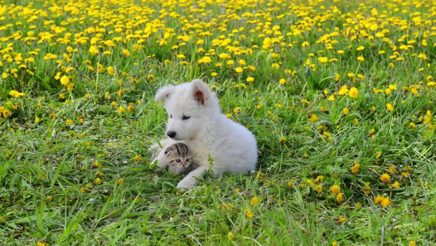 Puppy embracing kitten on green grass