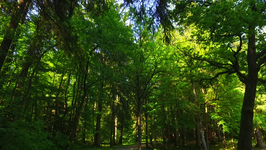 Light of the sun in spring forest. | Shutterstock HD Video #17203627