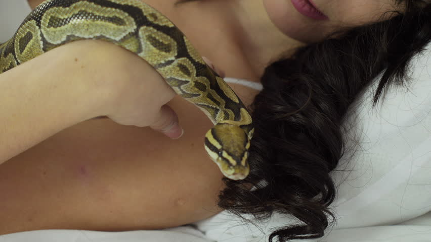 Adult snakes world