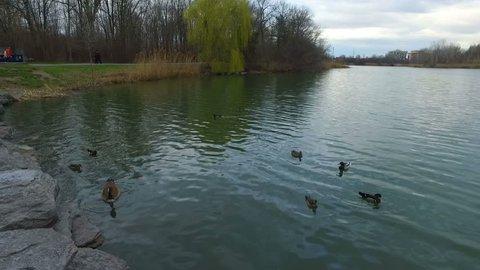 Nature Lake Views - Smooth Slow Motion