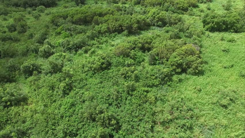 Aerial Over Grass And Shrubs Stock Footage Video 100 Royalty