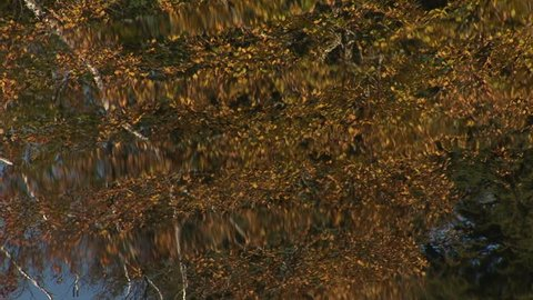 ECU of autumn reflection in rippling water