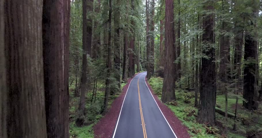 Flying down paved road in Redwood forest of northern California.