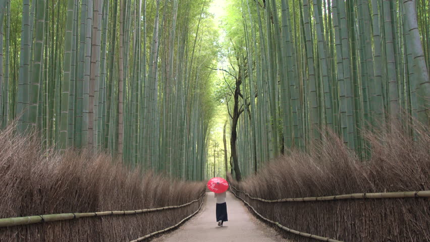 KYOTO, JAPAN - JANUARY 2016: Young woman walking through bamboo forest, Kyoto, Kyoto Prefecture, Japan
