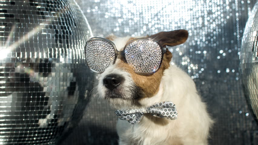 cute jack russell dog with crystal covered sunglasses in a disco setting