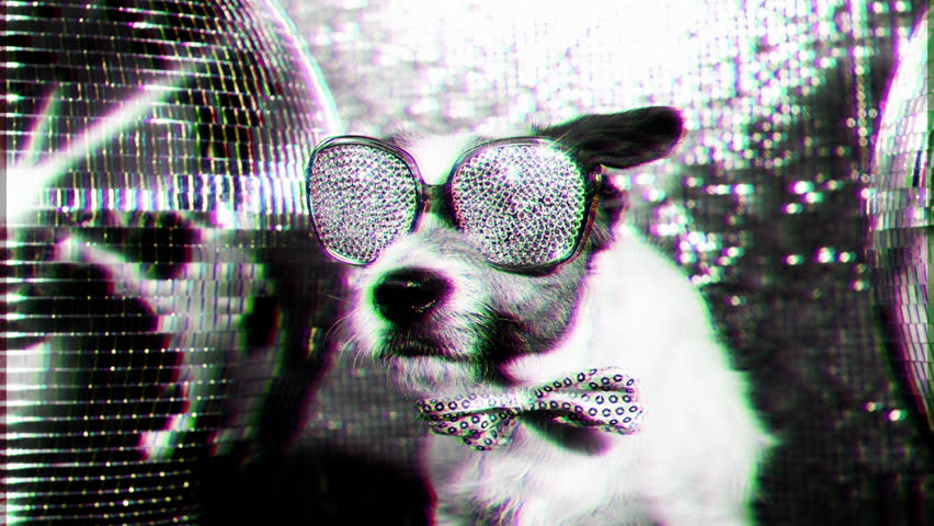 cute jack russell dog with crystal covered sunglasses in a disco setting #17565997