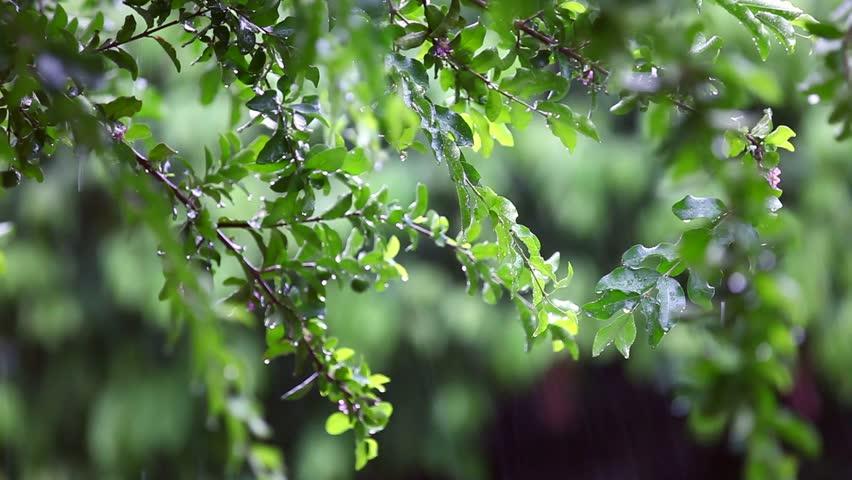 Tropical heavy rain in asian rainforest | Shutterstock HD Video #17577829