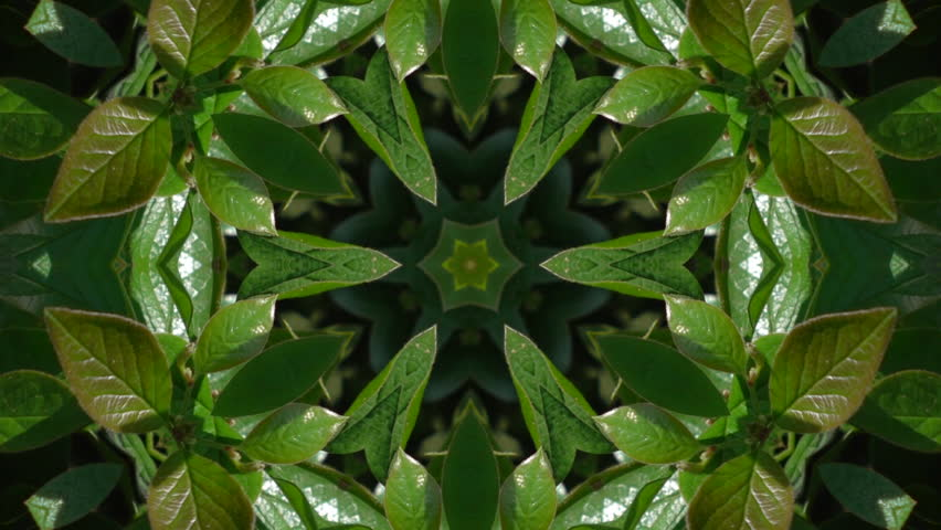 Wonderful abstract kaleidoscopic detailed pattern with fresh green leaves in six structure. Excellent animated spring floral background in stunning HD. Adorable texture visuals for wonderful intro.