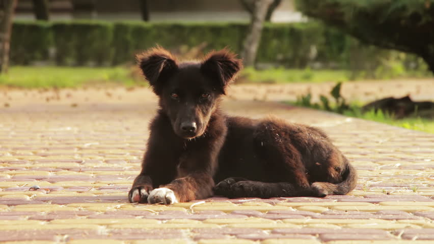 Homeless Dog Sitting in the Street | Shutterstock HD Video #17624299