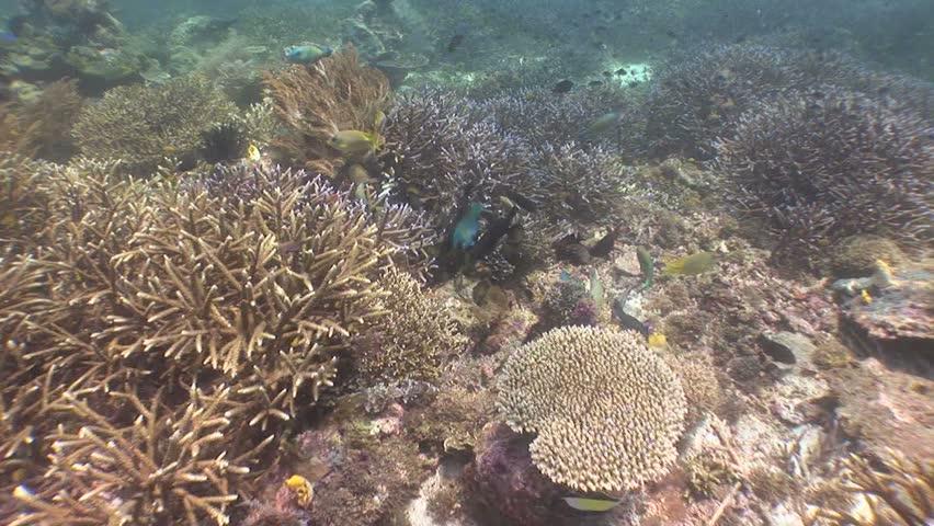 School of tangs feeding on reef | Shutterstock HD Video #1764389