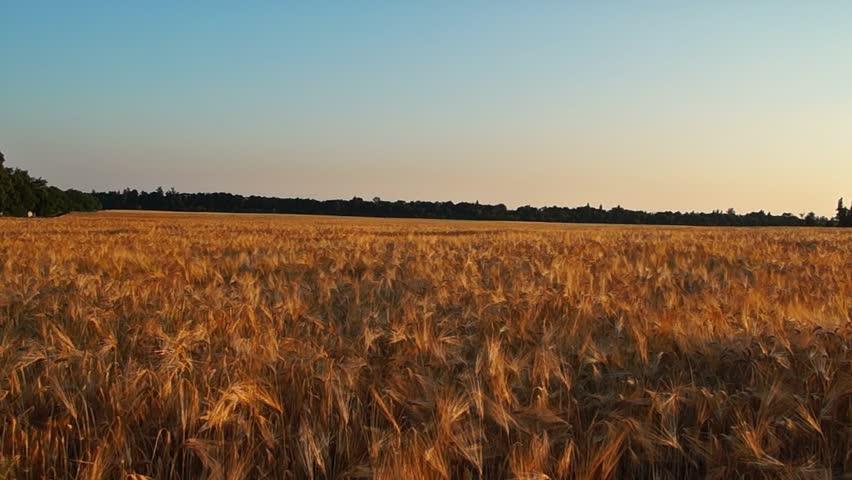 Field in the Evening Motion Camera | Shutterstock HD Video #17647228