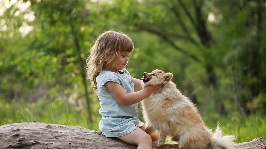 Little Girl And Pets Girl Stock Footage Video 100 Royalty Free 17680798 Shutterstock