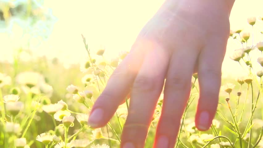 Young woman hand running through wild meadow field. Female hand touching wild flowers closeup. Summertime concept. Enjoying nature. Slow motion video footage 240 fps. Full HD 1080p