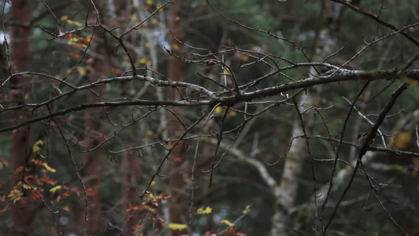 View of sparrow sitting on tree branch without leaf in autumn day in park. Nature. Birds | Shutterstock HD Video #17851375