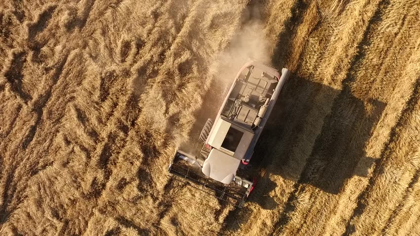 Aerial drone shot of combine harvester on wheat fields during harvest season | Shutterstock HD Video #18031414