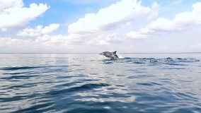 Tranquil and serene slow motion video of wild dolphins jump from water in sea