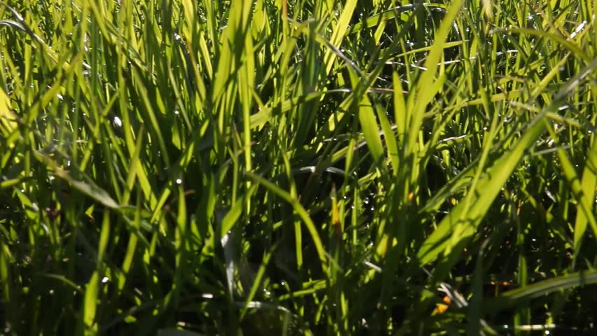 Moving Through Green Grass Worms Stock Footage Video 100
