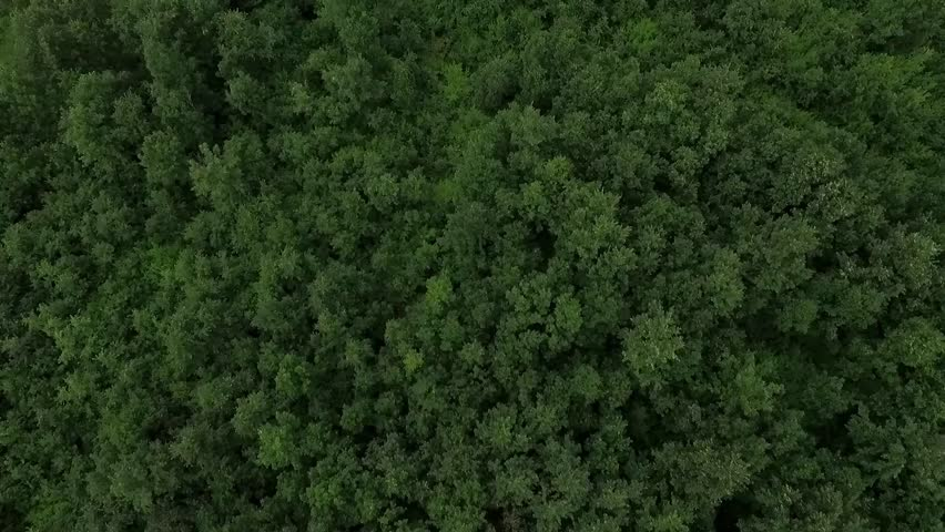 Aerial view of the woods. Flight over the trees . Flying over the top of trees .Flight over green forest. Serbia #18074251