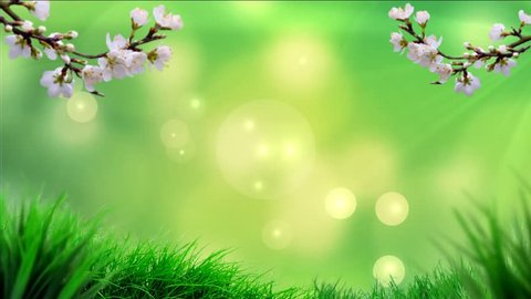 Animated Spring Video Background Animated Stock Footage Video 100 Royalty Free 18115216 Shutterstock