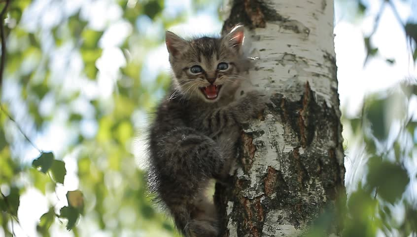 A little funny kitten meows on a tree   Shutterstock HD Video #18194398