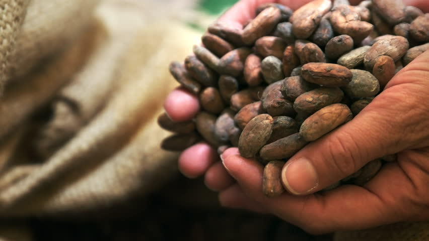A woman tips cacao beans into a bag in cusco, peru