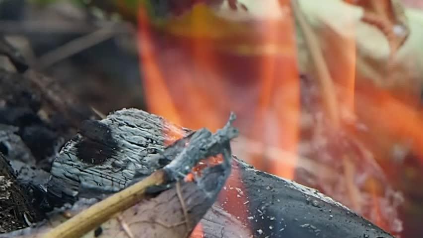 Grass Fire | Shutterstock HD Video #18270247