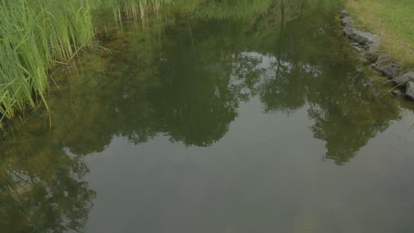 Vertical panoramic in natural garden lake and plants   Shutterstock HD Video #18379222