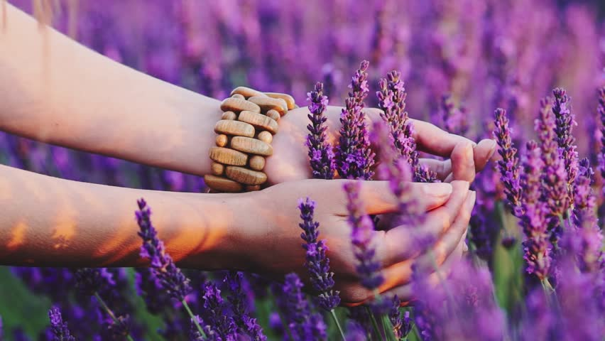 Close-up of woman's hand running through sunny lavender field. SLOW MOTION 120 fps. Girl's hand touching purple lavender flowers closeup. Plateau du Valensole, Provence, South France, Europe.   Shutterstock HD Video #18570581