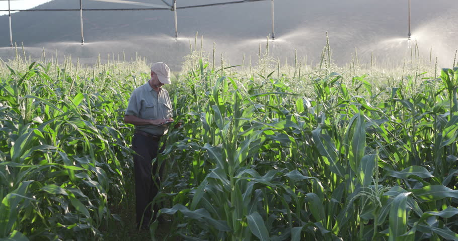 4K view of farmer using digital tablet and inspecting an irrigated cornfield | Shutterstock HD Video #18610148