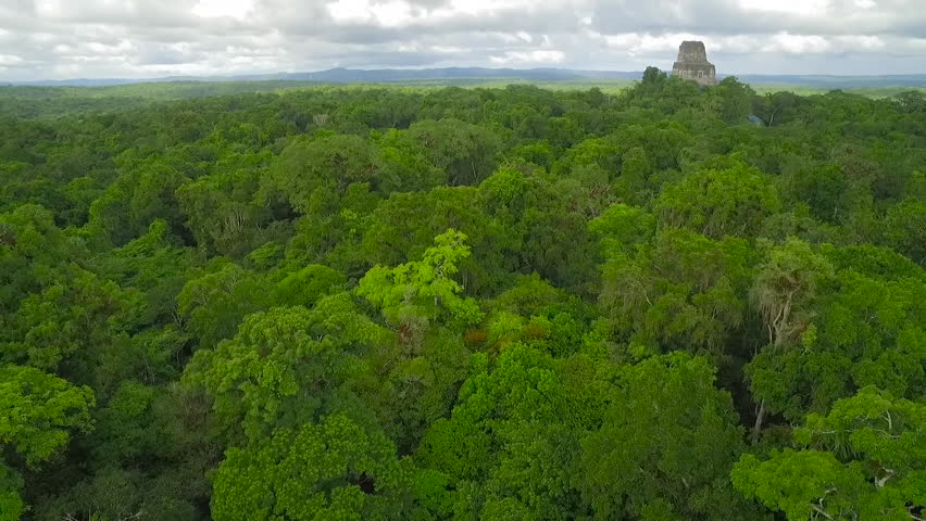 Spectacular aerial shot over the treetops and Tikal pyramids in Guatemala. (Guatemala 2010s)