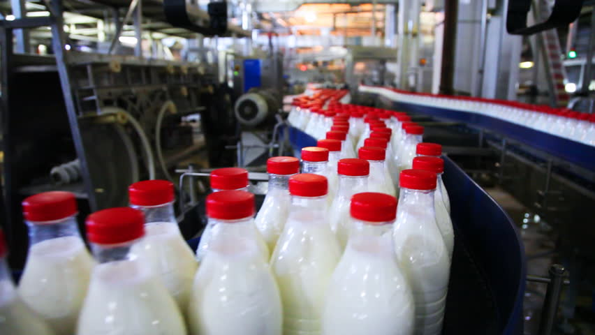 many bottles milk with red caps move wide conveyor belt at factory