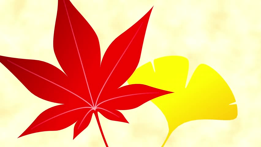 Maple ginkgo opening frame 2 pattern bright background #18666254