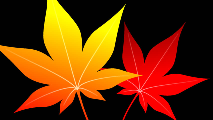 Autumn leaves maple opening frame 2 pattern alpha channel #18666266