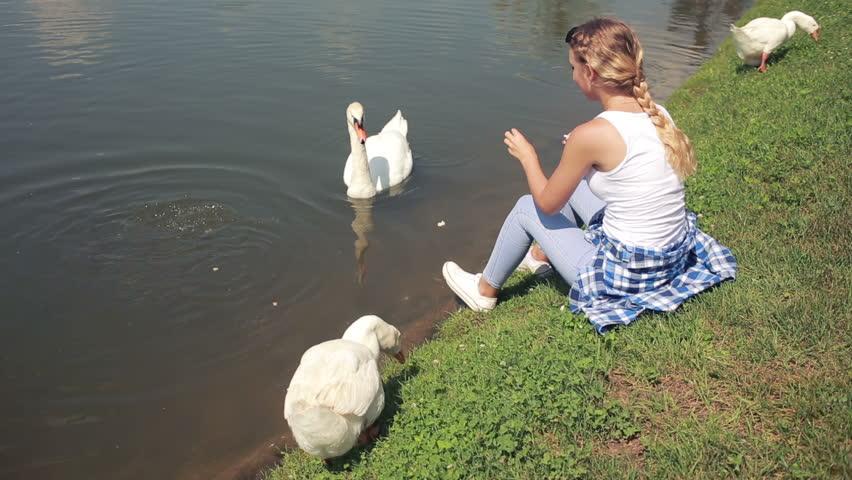 swan-feeding