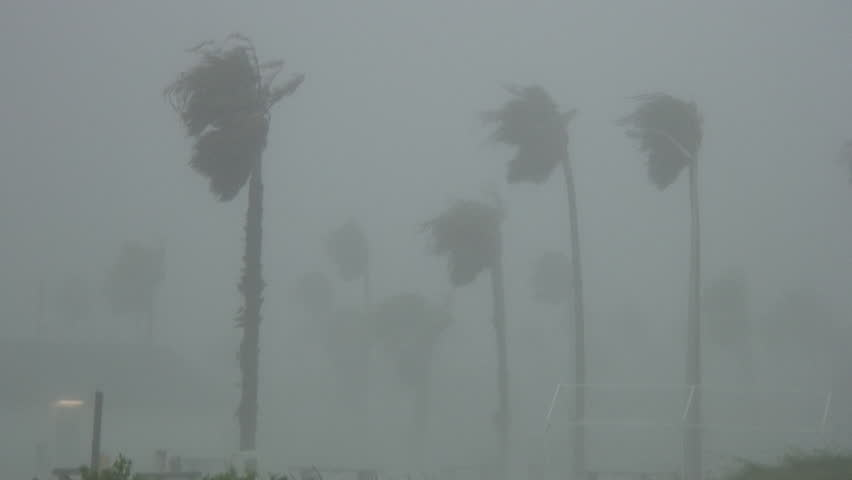 South Padre Island, TX/US - June 6, 2013 [Hurricane Alex winds producing whiteout conditions with blowing rain and bending palm trees.]