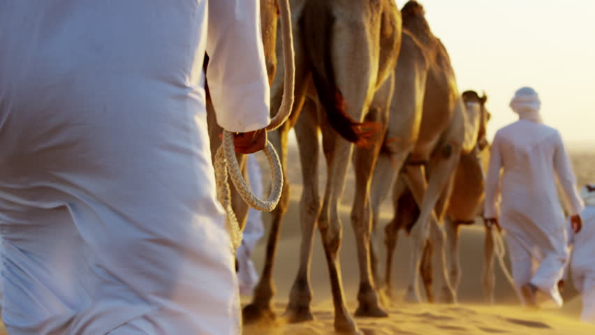 Aerial drone of a convoy of camels with owners across desert sand