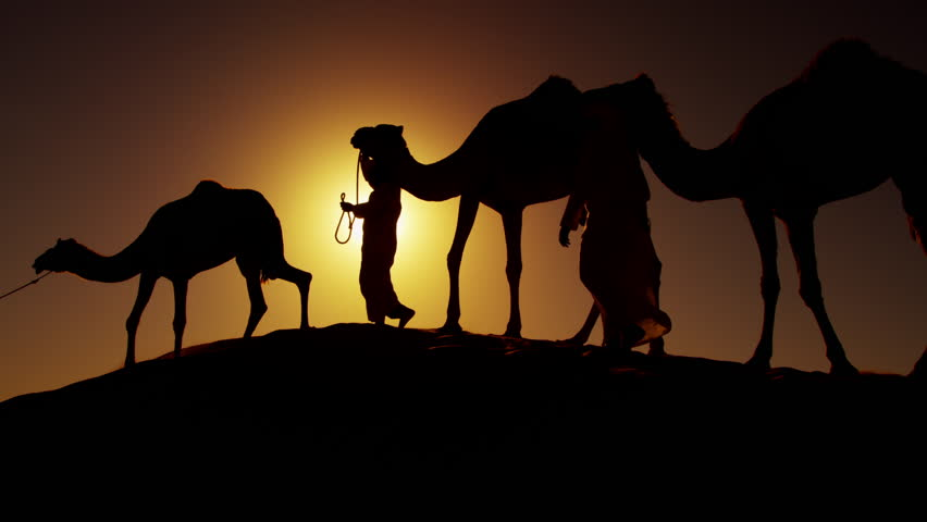 Middle Eastern male camel owners in desert convoy Arabia