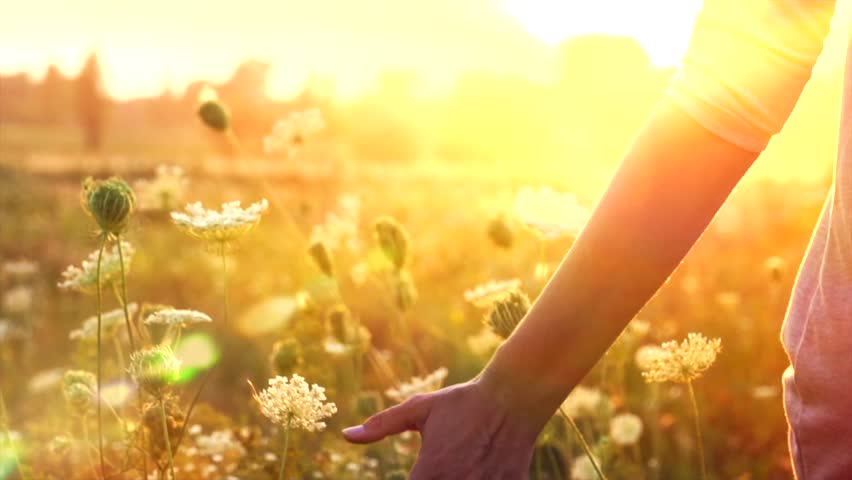 Beautiful young woman walking on field with wildflowers, enjoying nature outdoors. Slow motion 240 fps. Full HD 1080p