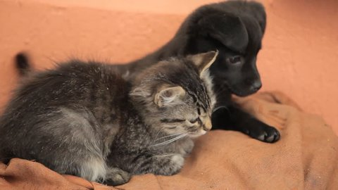 Friendly puppy dog and kitty cat in love Cute beautiful hairy Cubs playing each other fighting