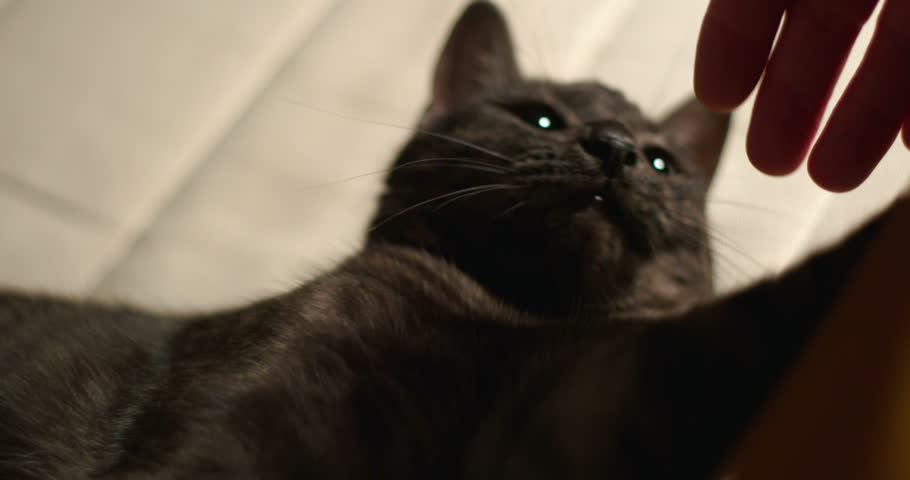 Cat close up slowmotion 4k | Shutterstock HD Video #18919514