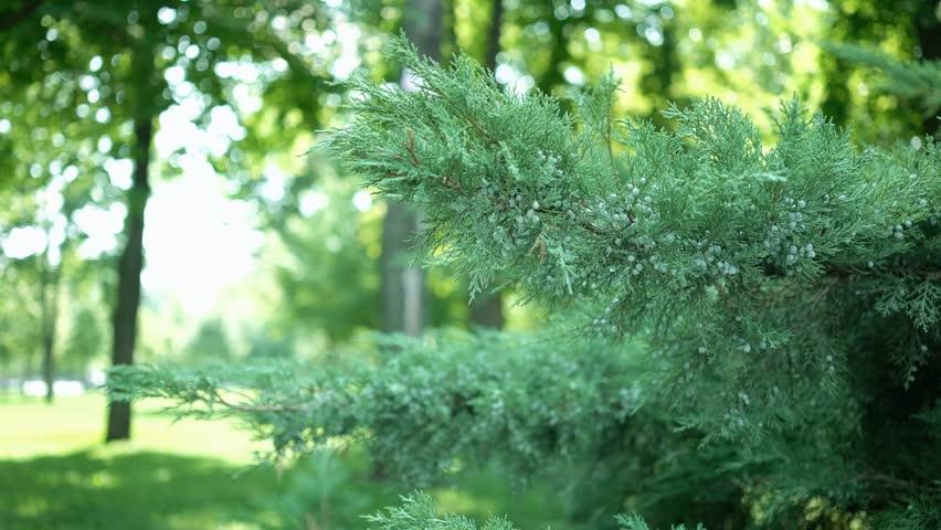 Bush Green Plants Branches Leaves Dof #18988381
