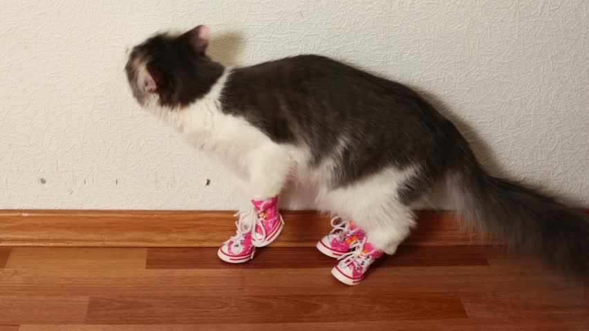 Cat in pink shoes sits on floor near white wall and then jumps #1900138