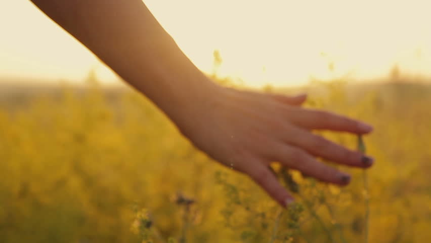 Girl on the sunset is on the flower field of flowers and touches hands   Shutterstock HD Video #19106032