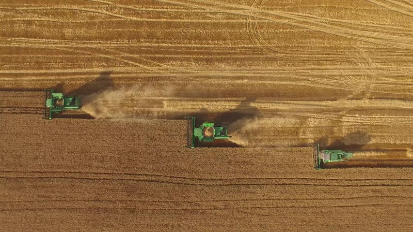 Combines in the field. Aerial view of harvesters. Season of gathering crops. Rye and barley. | Shutterstock HD Video #19113223